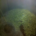 Hope we used enough hops